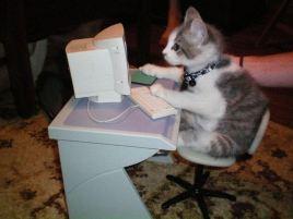 chat-derriere-ordinateur-geek