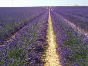 [Foodies Trip] ProvenceGourmande